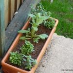 planterprogress-1