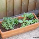planterprogress-2
