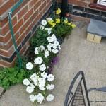 sideflowers