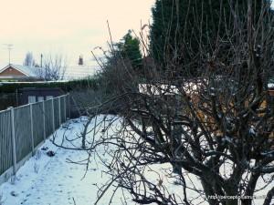 Garden - past tree