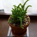 Like a fern